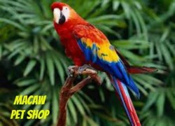 Macaw pet shop Cover Image