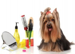Carlos and Friends Grooming pet shop Cover Image