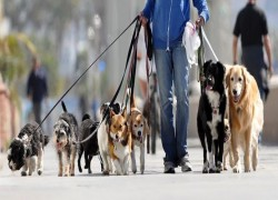 Paphos Dog Walkers Cover Image