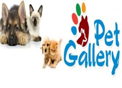 Pet Gallery Cover Image